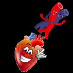 Circulatorty System