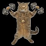 cat immunity system
