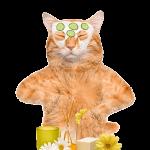 anti-aging cat 300
