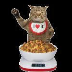cat dry food 300