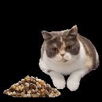 cat freeze dried 300