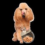 wetfood-dog-logo