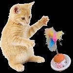 cat toy a