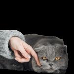 mood cat a1 ok